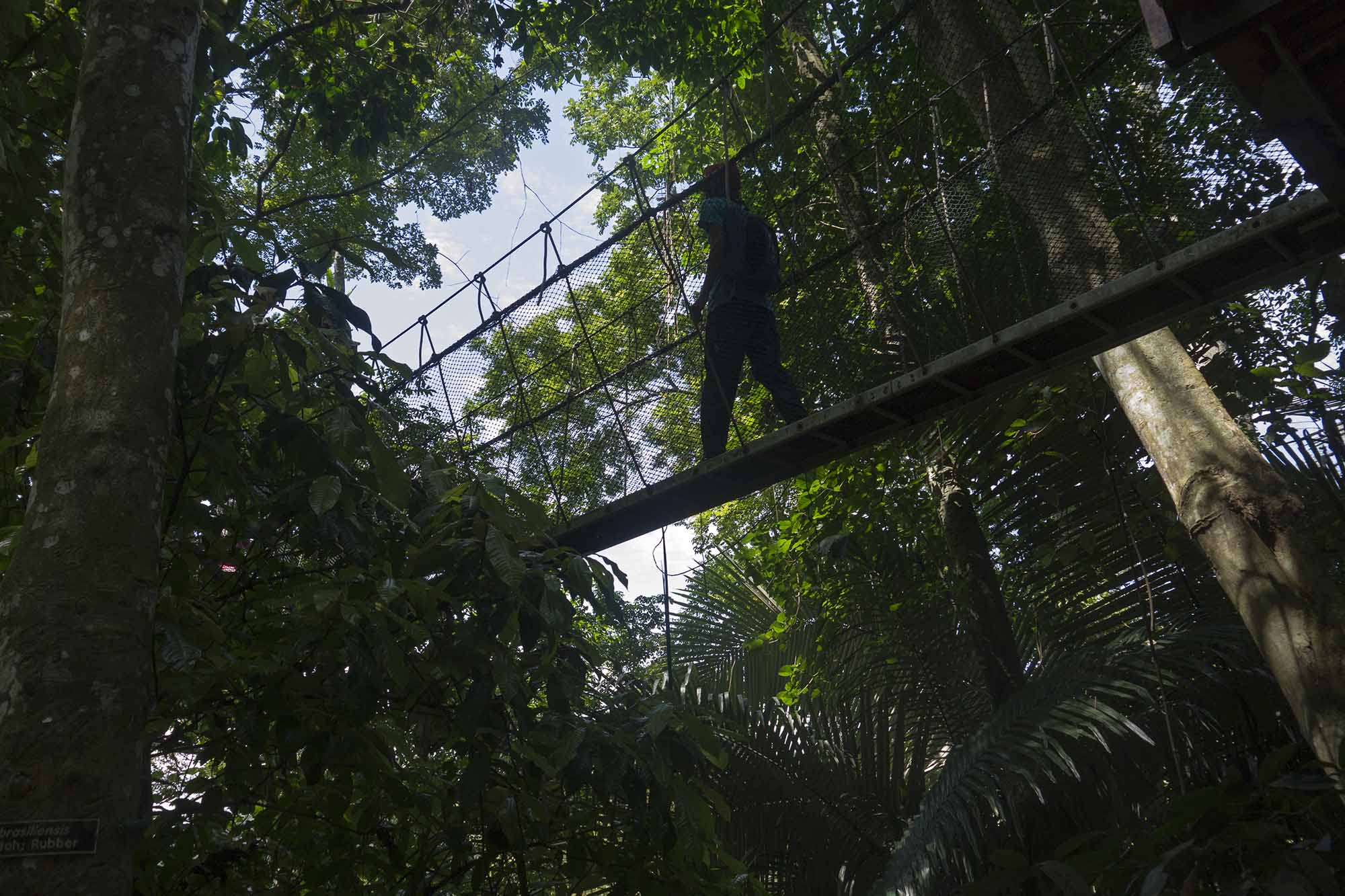 Riserva Forestale del FRIM di Kepong