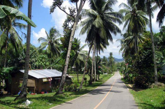 Bohol, tra scimmie e colline di cioccolato