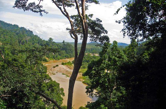 Uno sguardo nella giungla malese
