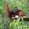 centro orangutan di Semenggoh