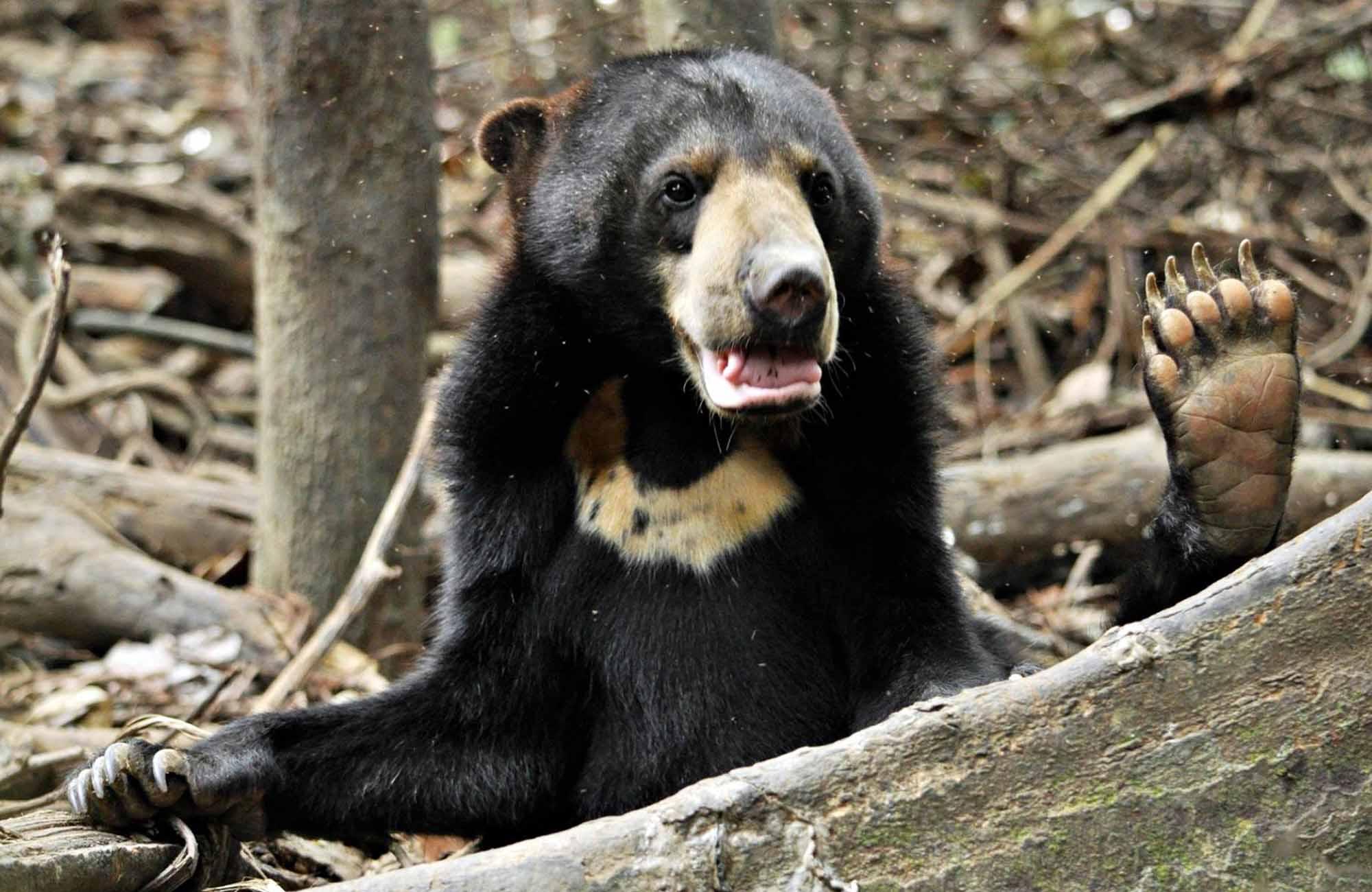 Il centro per la tutela dell'orso malese