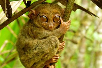 I 10 animali più curiosi della Malesia