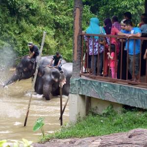 Santuario degli elefanti di Kuala Gandah