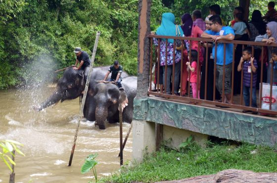 Il santuario degli elefanti