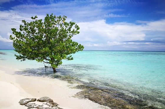 Isola di Pom Pom
