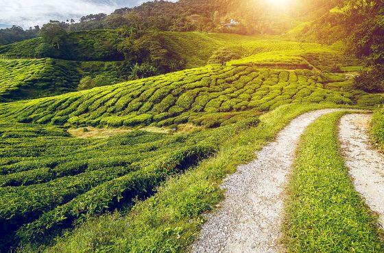 Il mio viaggio in Malesia