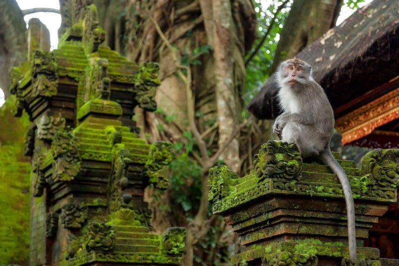 La foresta di Ubud