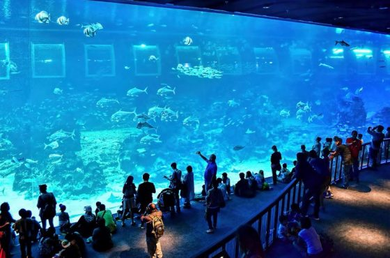 L'acquario di Singapore