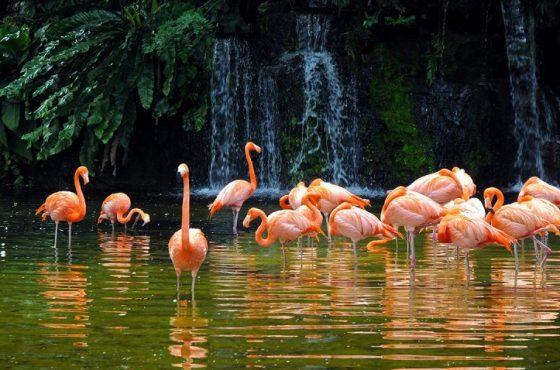 Lo zoo di Singapore