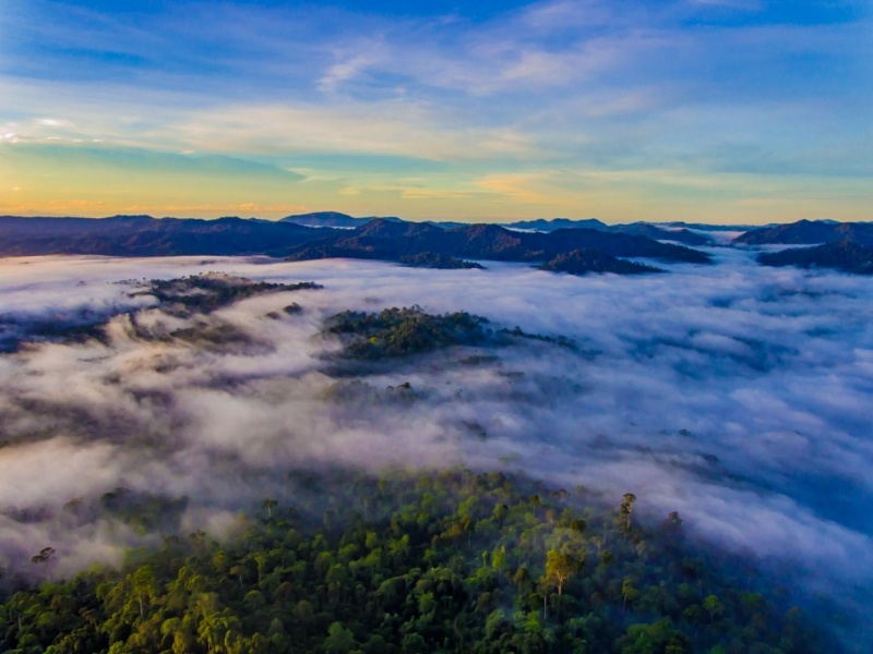 La riserva naturale del Danum Valley