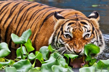 Top 5 animali della Malesia