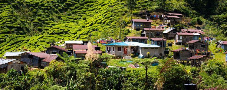 Cameron Highlands village